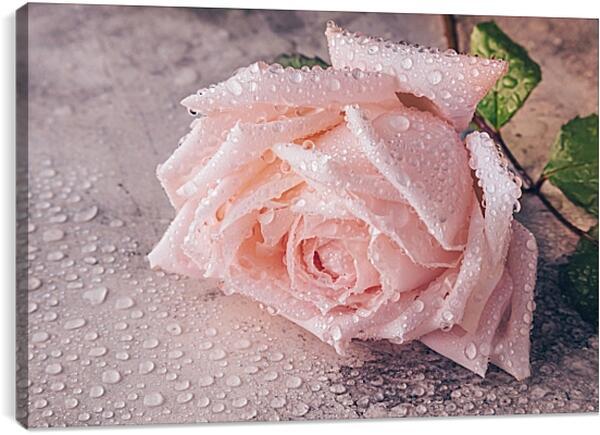 Постер на подрамнике - Роза