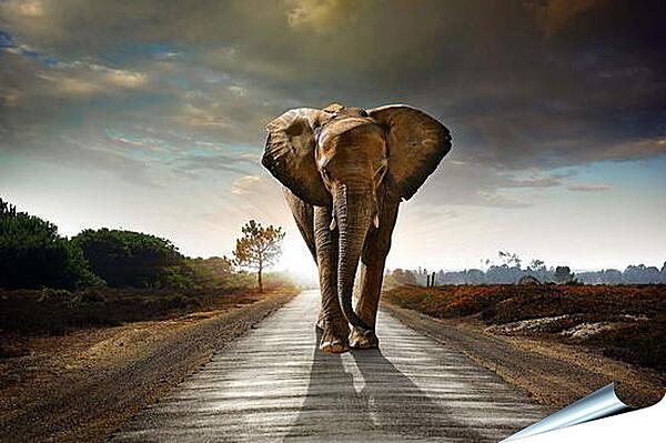 Плакат на стену - Слон