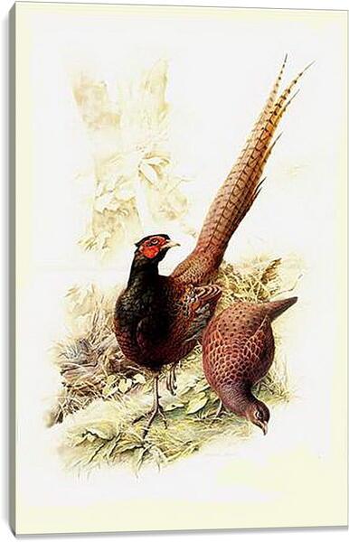 Постер на подрамнике - Пара фазанов