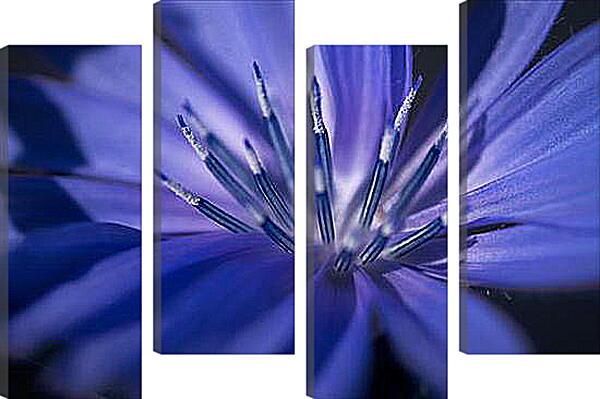 Модульная картина - Цветок цикория