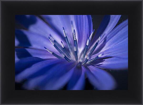 Картина в раме - Цветок цикория