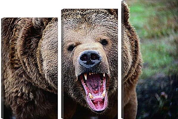 Модульная картина - Медведь