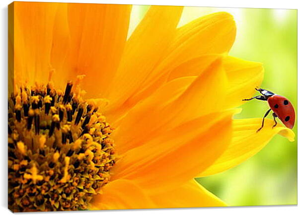 Постер на подрамнике - Цветок  и божья коровка