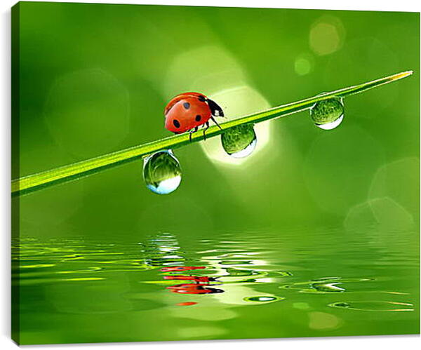 Постер на подрамнике - Божья коровка на травинке с росой