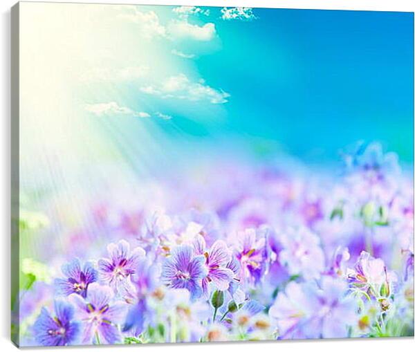 Постер на подрамнике - Фиалки в лучах солнца