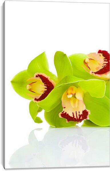 Постер на подрамнике - Орхидеи