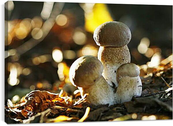 Постер на подрамнике - Белые грибы