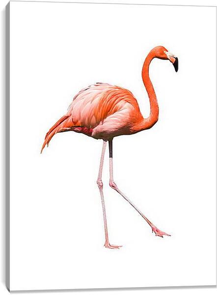 Постер на подрамнике - Фламинго