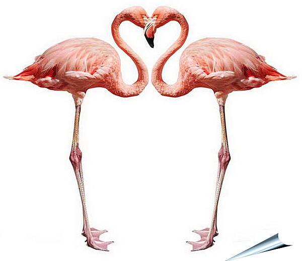 Плакат на стену - Сердце фламинго