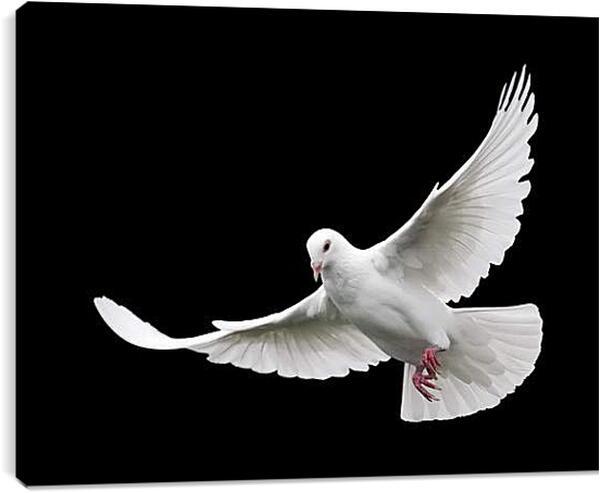 Постер на подрамнике - Белый голубь