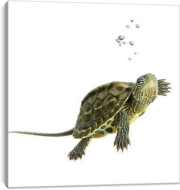 Постер на подрамнике - Черепашка в воде