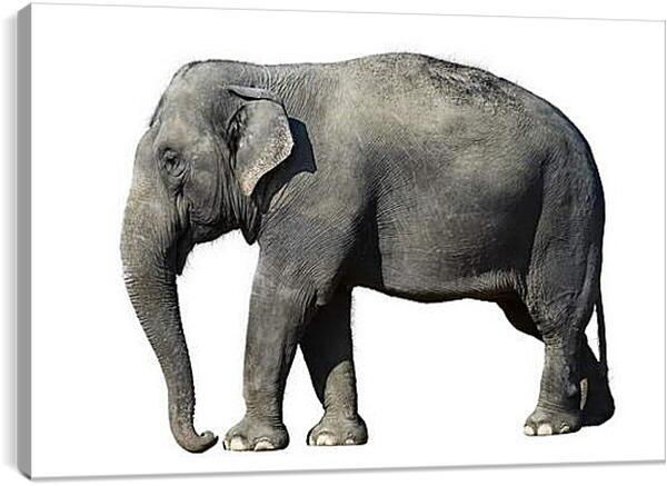 Постер на подрамнике - Слон