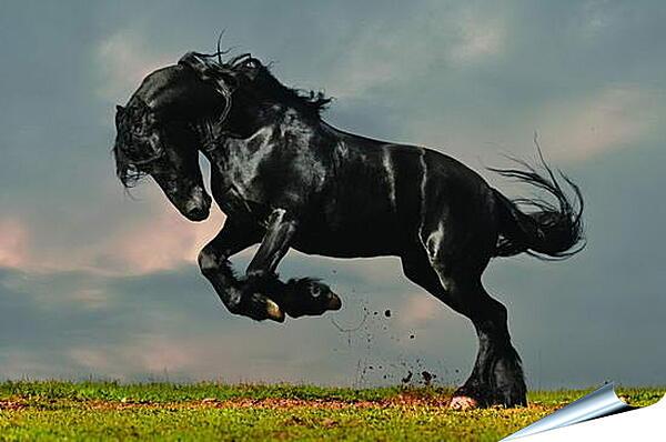 Плакат на стену - Вороной конь
