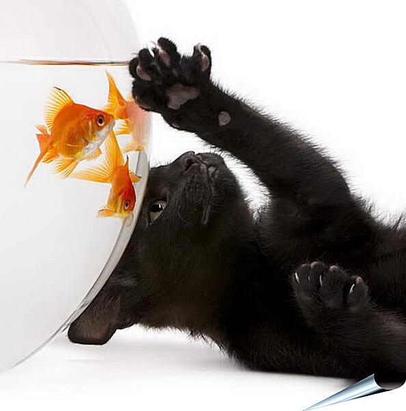 Плакат на стену - Котик и рыбка