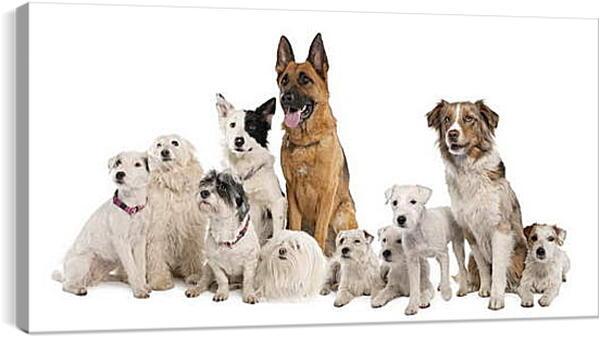 Постер на подрамнике - Собаки