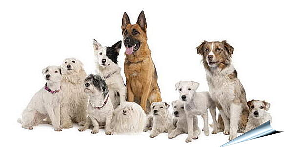 Плакат на стену - Собаки