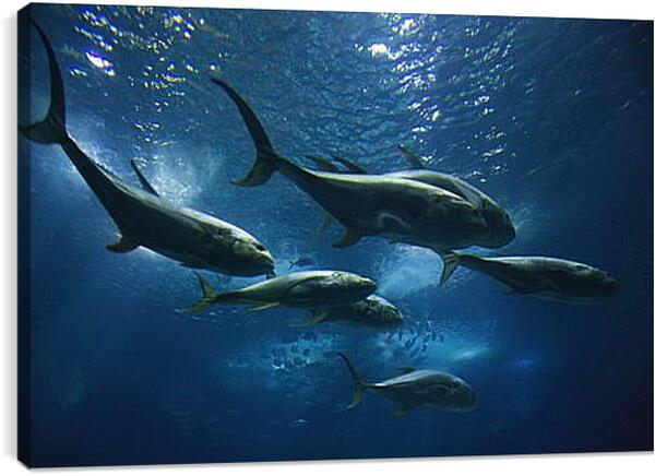 Постер на подрамнике - Подводный мир