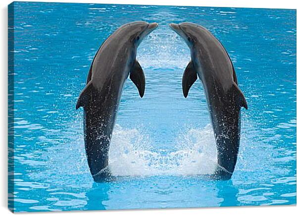 Постер на подрамнике - Два дельфина