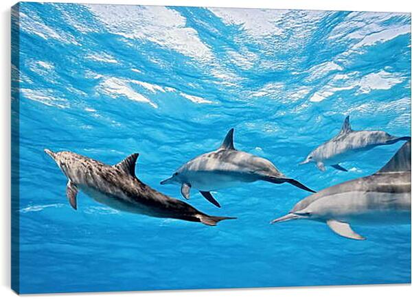 Постер на подрамнике - Семья дельфинов