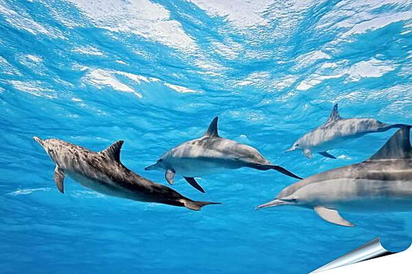 Плакат на стену - Семья дельфинов