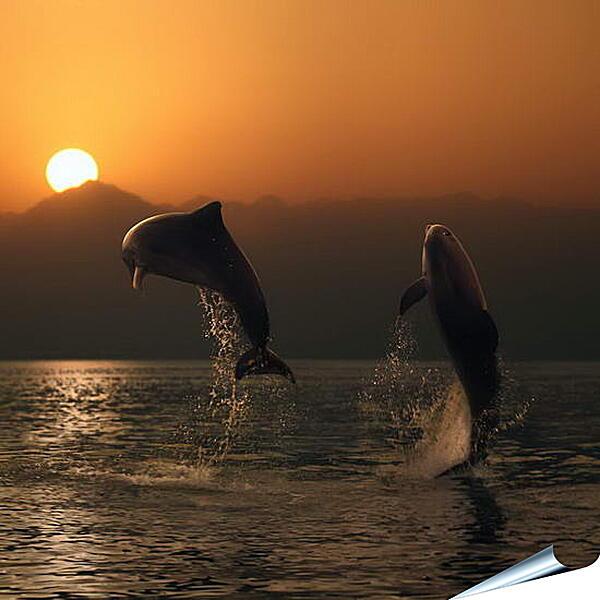 Плакат на стену - Дельфины в закате