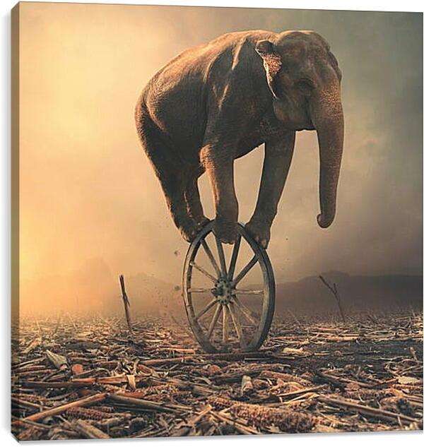 Постер на подрамнике - Слон на колесе