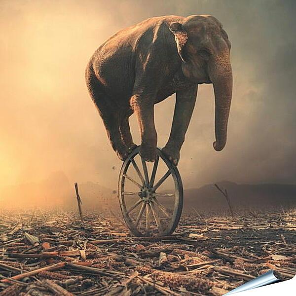 Плакат на стену - Слон на колесе