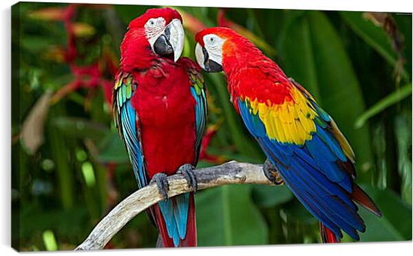 Постер на подрамнике - Попугайчики