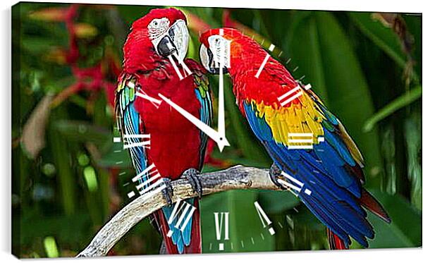 Часы картина - Попугайчики