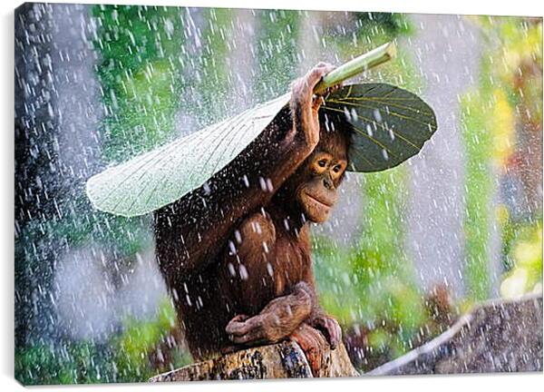 Постер на подрамнике - Обезьянка прячется от дождя