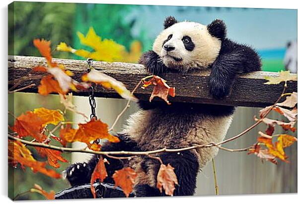 Постер на подрамнике - Панда