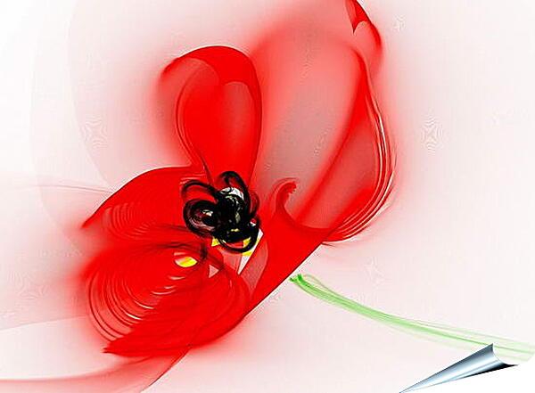 Плакат на стену - Красный цветок