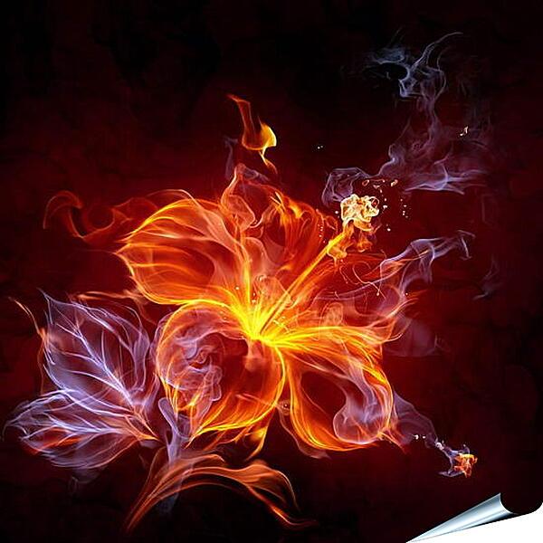 Плакат на стену - Огненный цветок