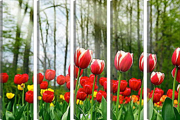 Модульная картина - Тюльпаны