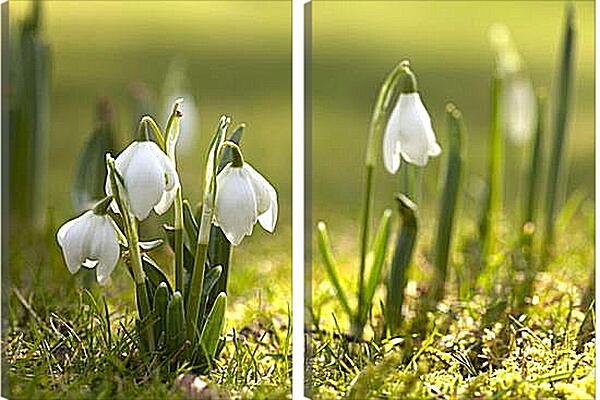 Модульная картина - Подснежники весной