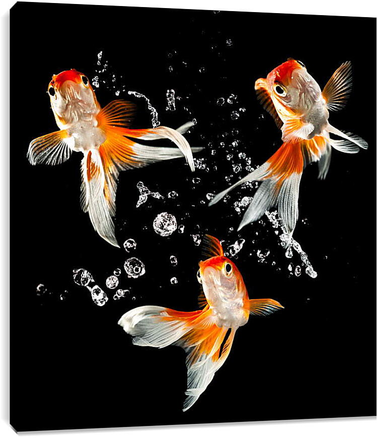 Танец рыбокЖивотные<br>Модульная картина из 3 частей . Любые размеры и конфигурации на выбор. Материал печати: натуральный холст.<br>Размер: 84x90 см., 112x120 см., 140x150 см.;