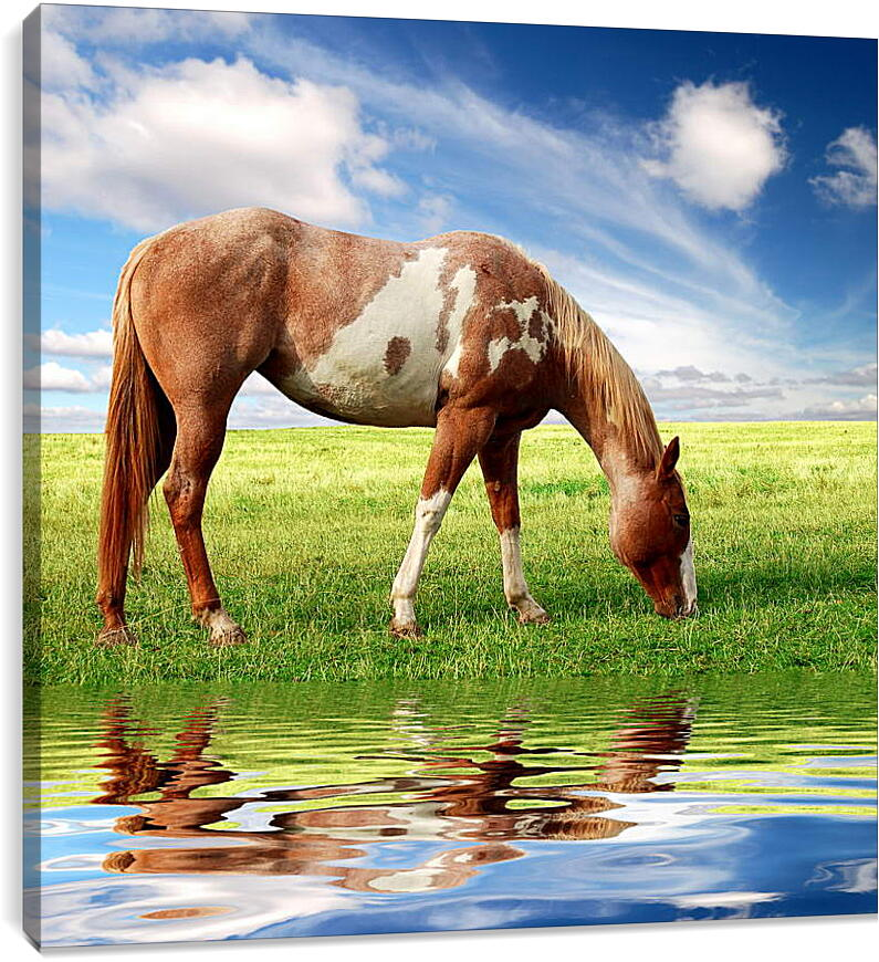 Лошадь возле речкиЖивотные<br>Модульная картина из 2 частей . Любые размеры и конфигурации на выбор. Материал печати: натуральный холст.<br>Размер: 89x90 см., 119x120 см., 149x150 см.;