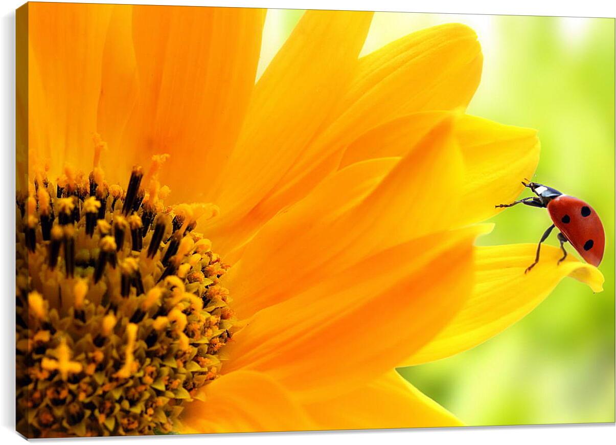 Божья коровка на цветкеЖивотные<br>Модульная картина из 3 частей . Любые размеры и конфигурации на выбор. Материал печати: натуральный холст.<br>Размер: 90x60 см., 120x80 см., 150x100 см.;