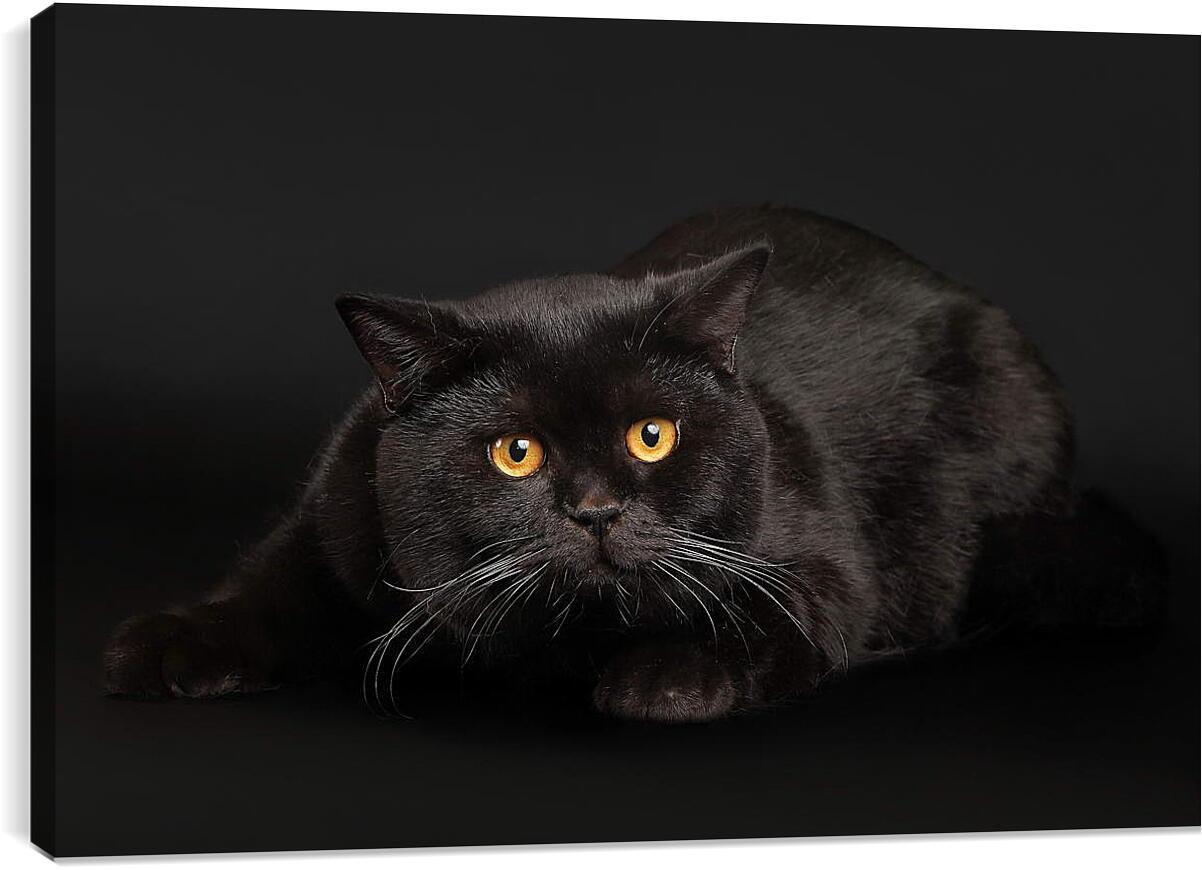 Кот чернее ночиЖивотные<br>Модульная картина из 2 частей . Любые размеры и конфигурации на выбор. Материал печати: натуральный холст.<br>Размер: 90x60 см., 120x80 см., 150x100 см.;