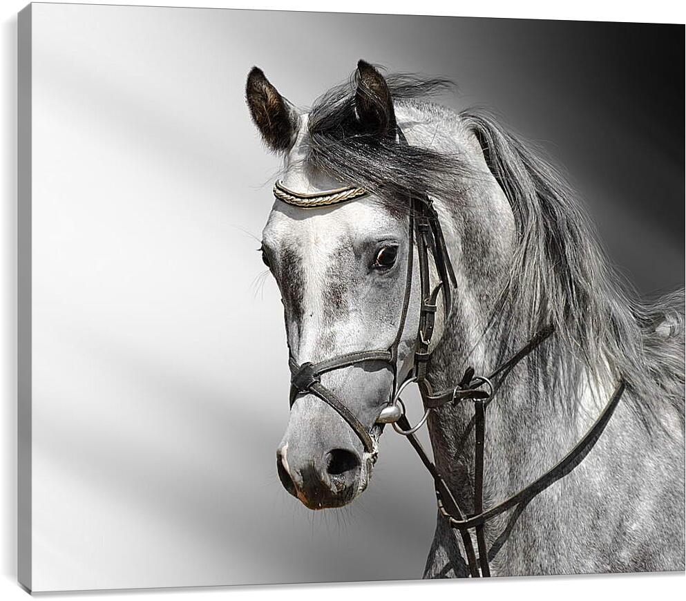 Красивая лошадьЖивотные<br>Модульная картина из 5 частей . Любые размеры и конфигурации на выбор. Материал печати: натуральный холст.<br>Размер: 90x73 см., 120x97 см., 150x121 см.;