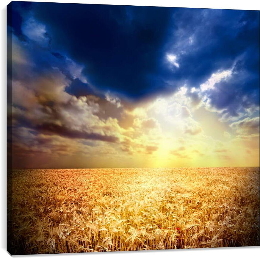 Поле пшеницыПрирода<br>Модульная картина из 3 частей . Любые размеры и конфигурации на выбор. Материал печати: натуральный холст.<br>Размер: 90x83 см., 120x110 см., 150x138 см.;