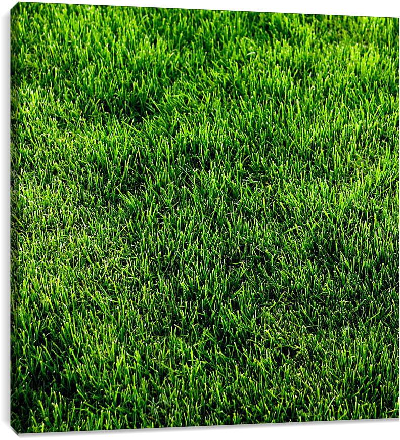 Зеленая траваПрирода<br>Модульная картина из 3 частей . Любые размеры и конфигурации на выбор. Материал печати: натуральный холст.<br>Размер: 89x90 см., 118x120 см., 148x150 см.;