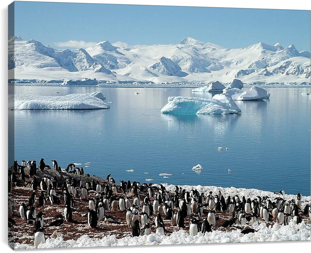 Арктика пингвиныПрирода<br>Модульная картина из 2 частей . Любые размеры и конфигурации на выбор. Материал печати: натуральный холст.<br>Размер: 90x67 см., 120x90 см., 150x112 см.;