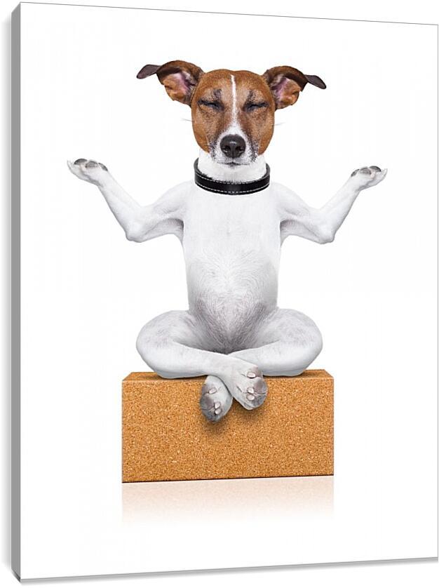 Собака медитируетЮмор<br>Модульная картина из 5 частей . Любые размеры и конфигурации на выбор. Материал печати: натуральный холст.<br>Размер: 73x90 см., 98x120 см., 122x150 см.;